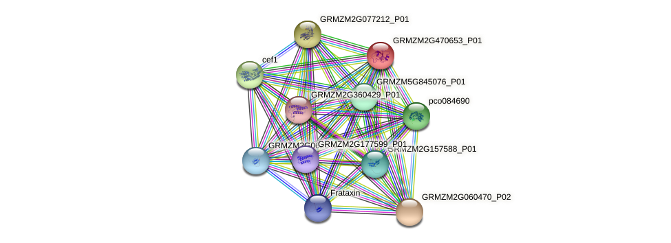 GRMZM2G470653_P01 protein (Zea mays) - STRING interaction network