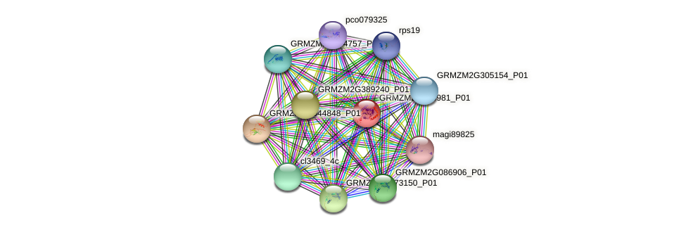 GRMZM2G470981_P01 protein (Zea mays) - STRING interaction network