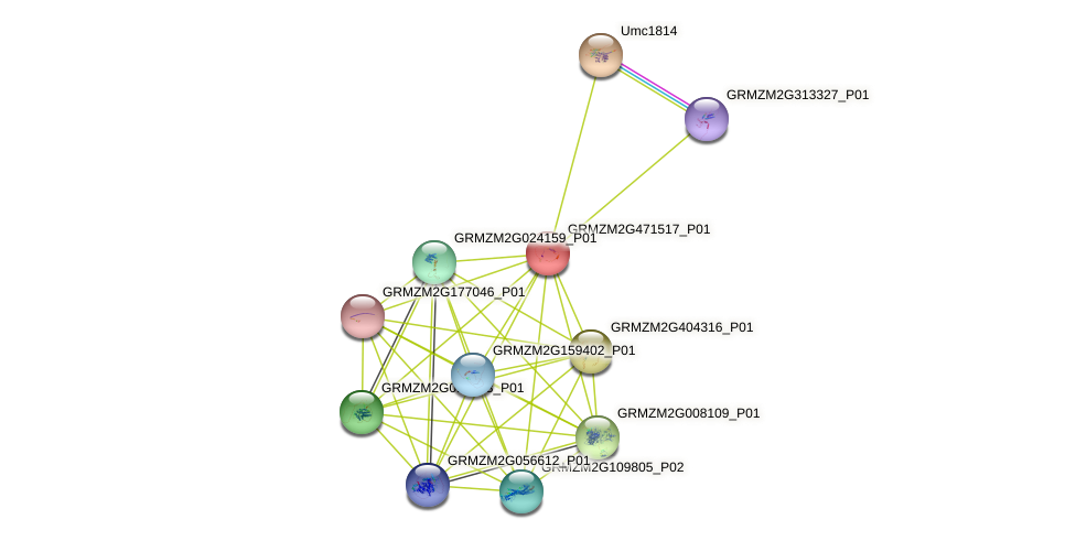 100382405 protein (Zea mays) - STRING interaction network