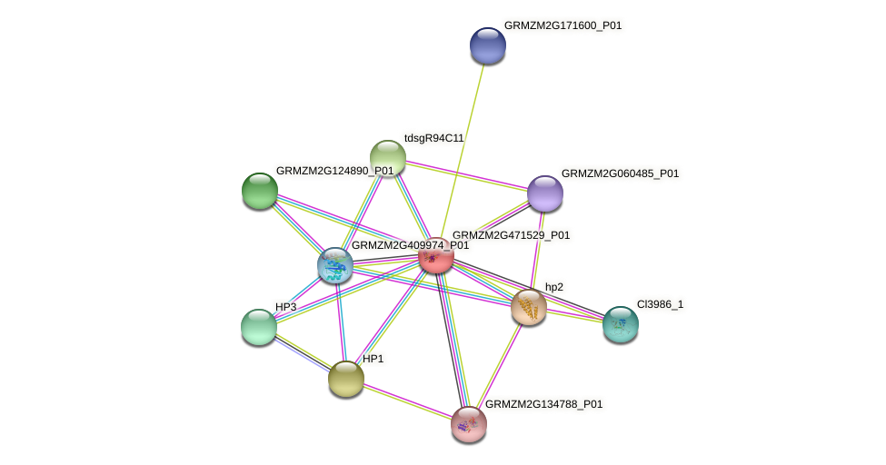 Zm.162649 protein (Zea mays) - STRING interaction network