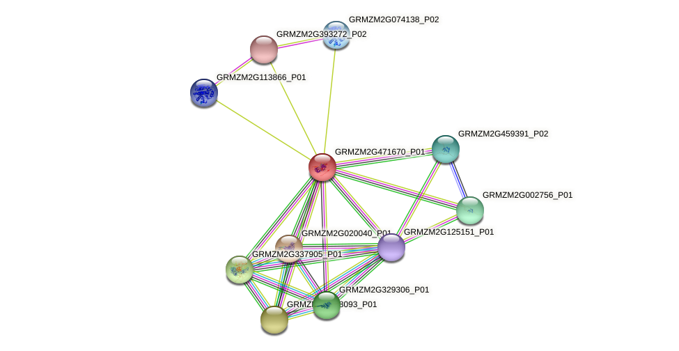 GRMZM2G471670_P01 protein (Zea mays) - STRING interaction network