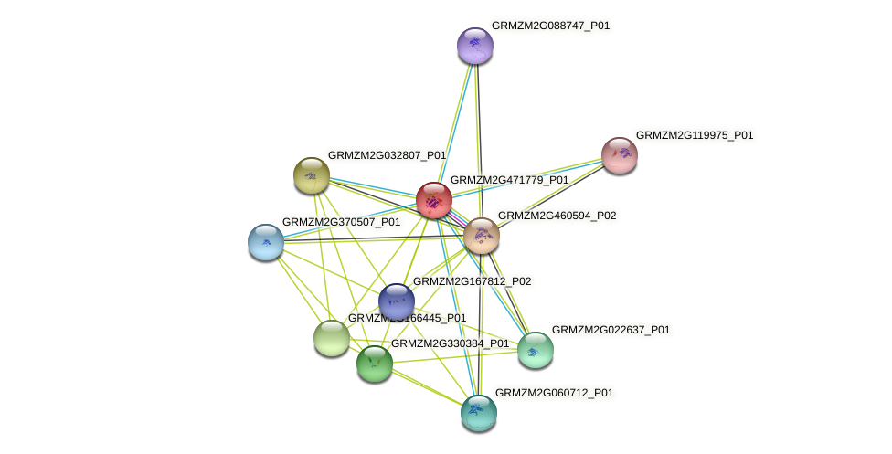 Zm.16005 protein (Zea mays) - STRING interaction network