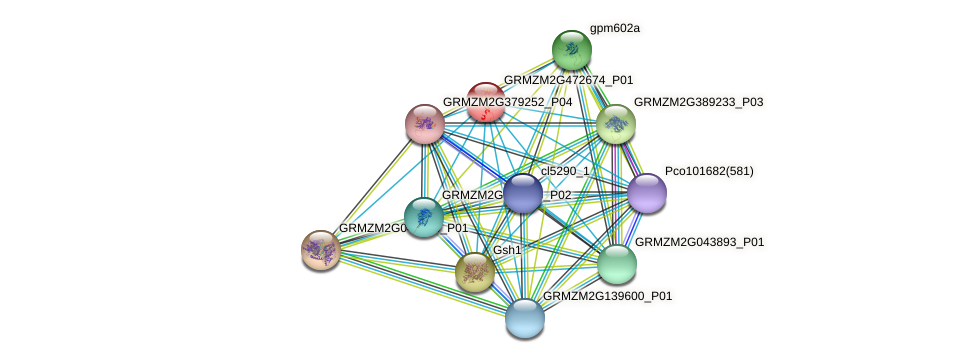 GRMZM2G472674_P01 protein (Zea mays) - STRING interaction network