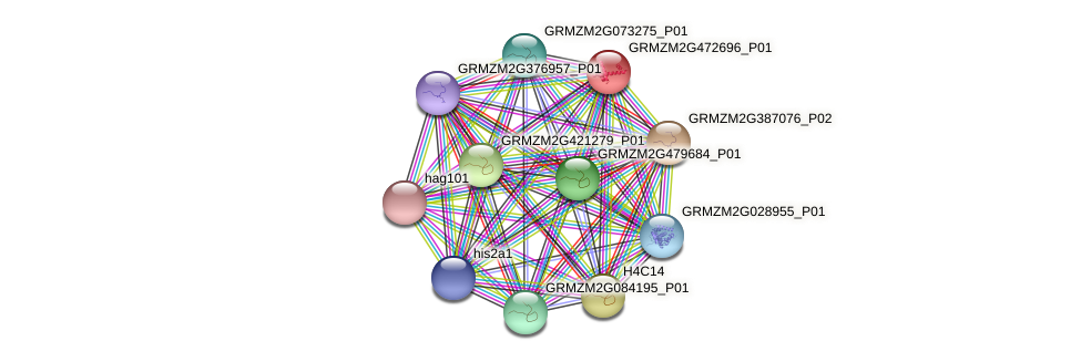 GRMZM2G472696_P01 protein (Zea mays) - STRING interaction network