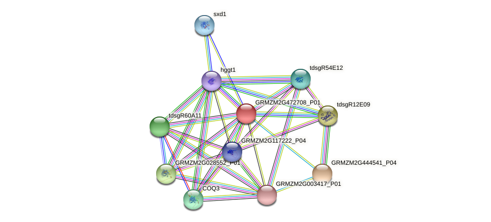 GRMZM2G472708_P01 protein (Zea mays) - STRING interaction network