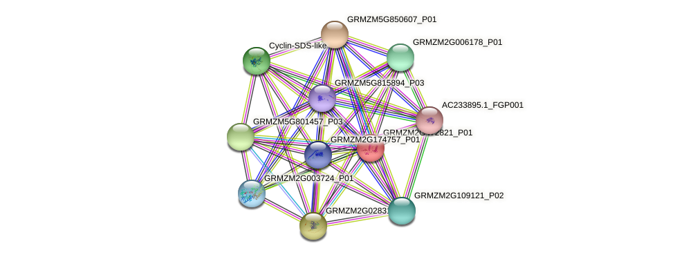 GRMZM2G472821_P01 protein (Zea mays) - STRING interaction network