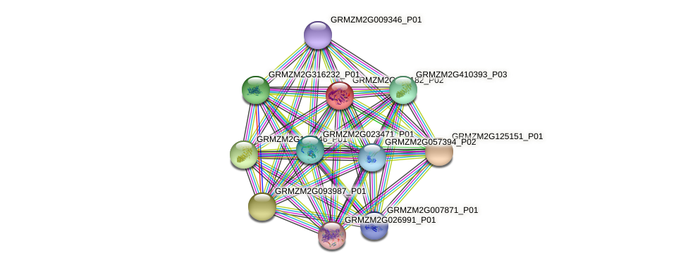GRMZM2G473182_P02 protein (Zea mays) - STRING interaction network