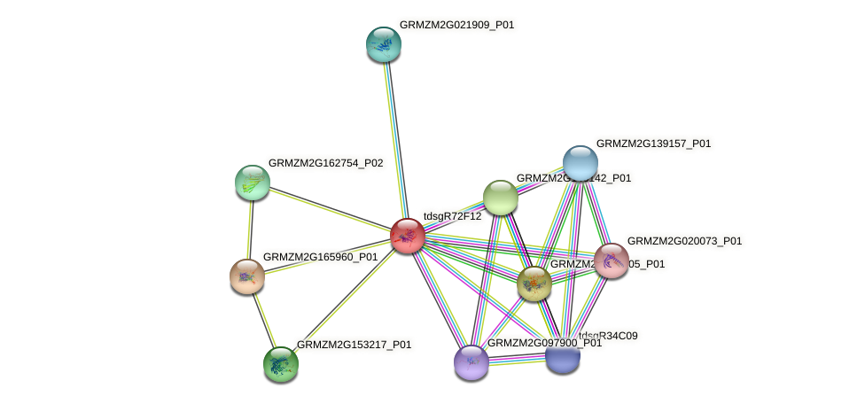 Zm.147891 protein (Zea mays) - STRING interaction network