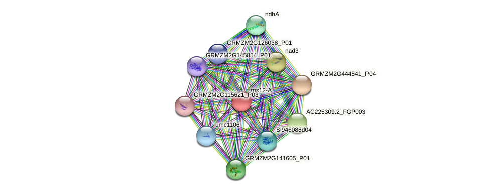rps12-A protein (Zea mays) - STRING interaction network