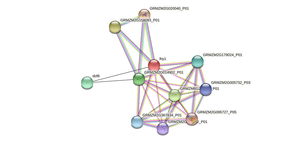 Zm.118069 protein (Zea mays) - STRING interaction network