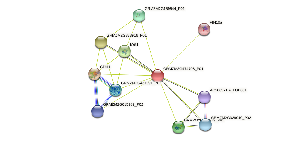 103644200 protein (Zea mays) - STRING interaction network