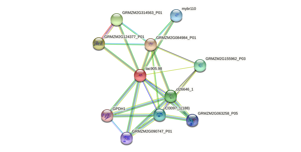 tac905.98 protein (Zea mays) - STRING interaction network