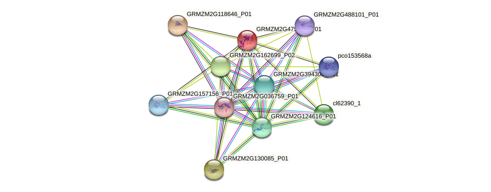 GRMZM2G475349_P01 protein (Zea mays) - STRING interaction network