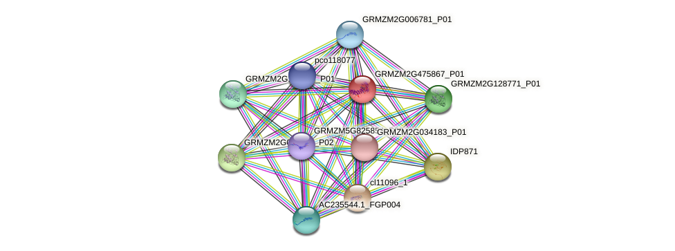 GRMZM2G475867_P01 protein (Zea mays) - STRING interaction network