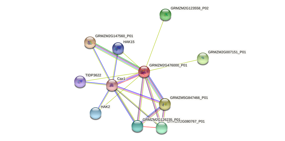 GRMZM2G476000_P01 protein (Zea mays) - STRING interaction network