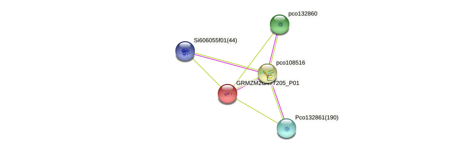 100193231 protein (Zea mays) - STRING interaction network