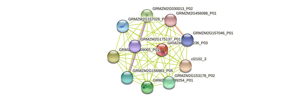GRMZM2G477236_P03 protein (Zea mays) - STRING interaction network
