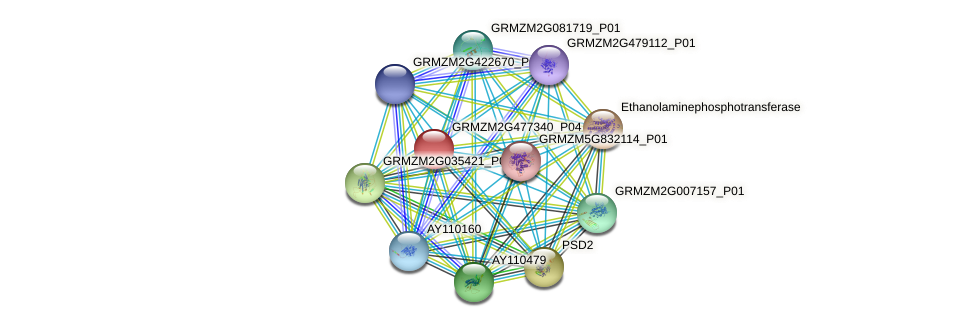GRMZM2G477340_P04 protein (Zea mays) - STRING interaction network