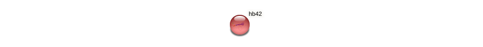 hb42 protein (Zea mays) - STRING interaction network
