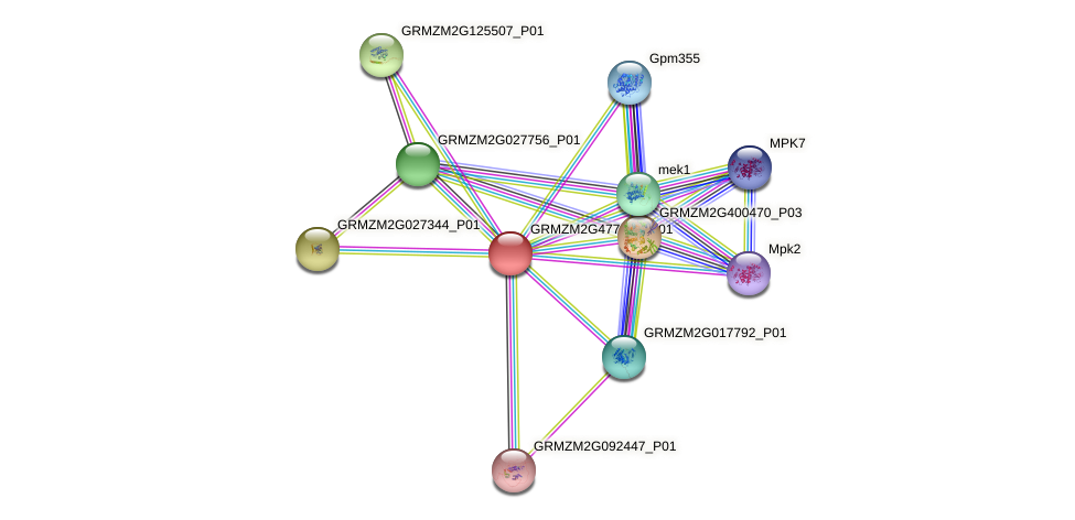 Zm.159788 protein (Zea mays) - STRING interaction network