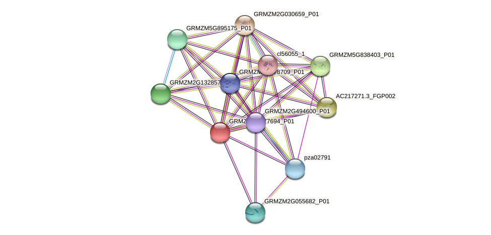 GRMZM2G477694_P01 protein (Zea mays) - STRING interaction network