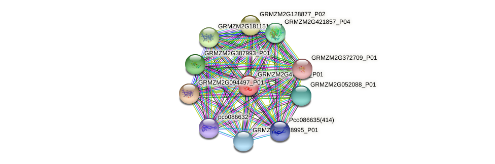 GRMZM2G477771_P01 protein (Zea mays) - STRING interaction network