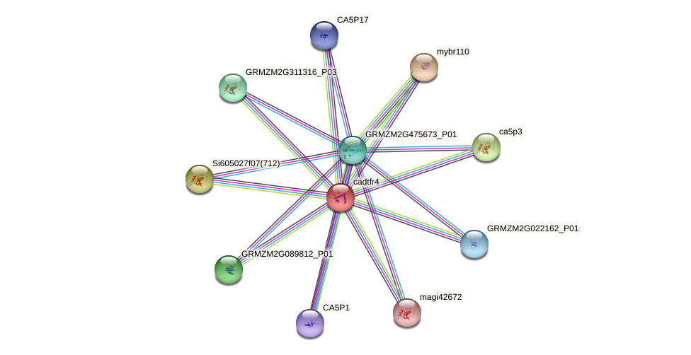 cadr4 protein (Zea mays) - STRING interaction network