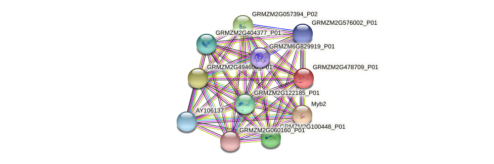 GRMZM2G478709_P01 protein (Zea mays) - STRING interaction network