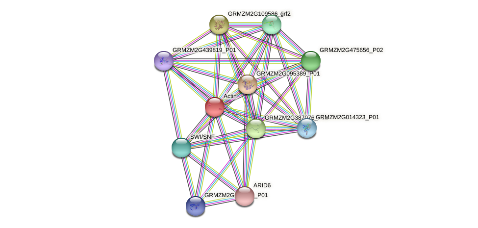GRMZM2G478779_P01 protein (Zea mays) - STRING interaction network