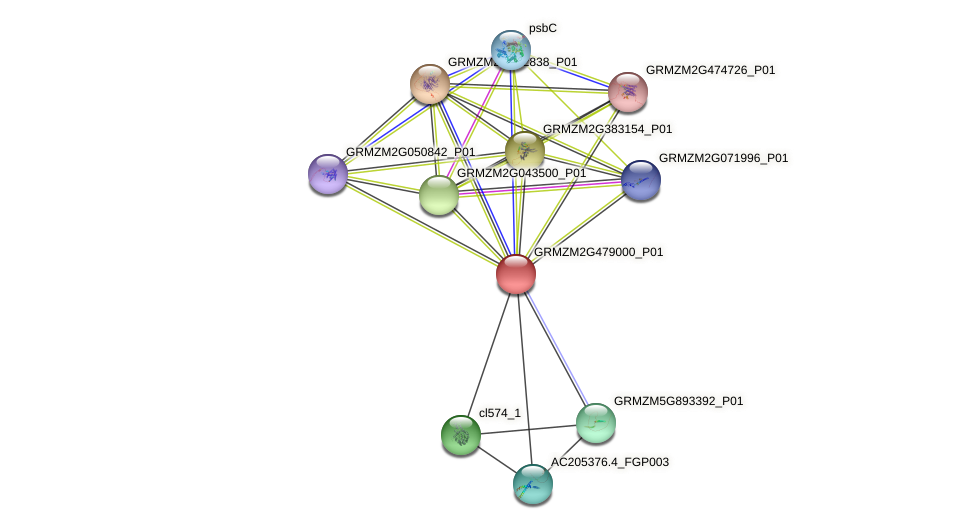 GRMZM2G479000_P01 protein (Zea mays) - STRING interaction network
