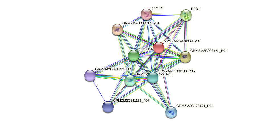 GRMZM2G479068_P01 protein (Zea mays) - STRING interaction network