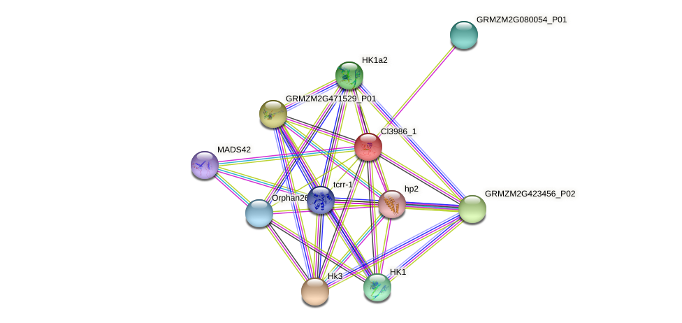 Zm.3355 protein (Zea mays) - STRING interaction network