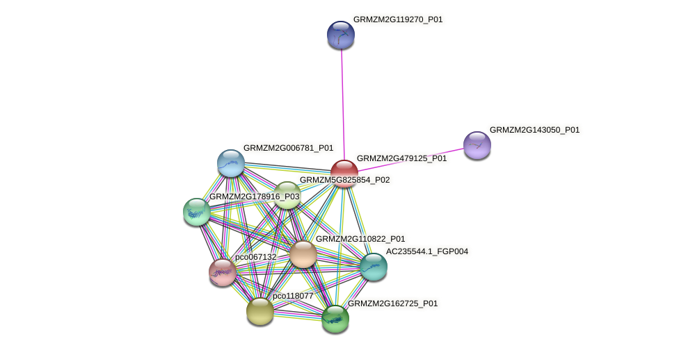 GRMZM2G479125_P01 protein (Zea mays) - STRING interaction network
