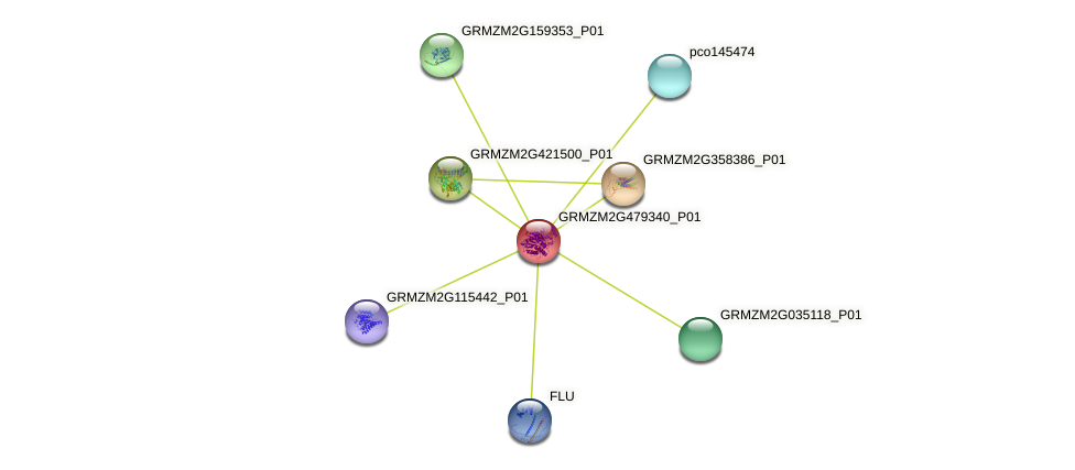 GRMZM2G479340_P01 protein (Zea mays) - STRING interaction network