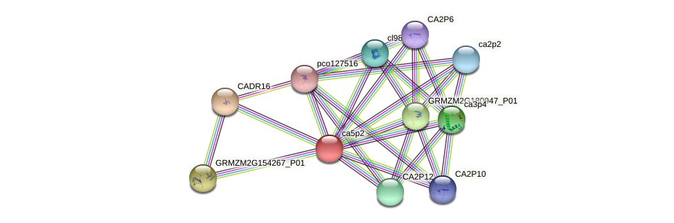 CA5P2 protein (Zea mays) - STRING interaction network