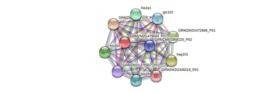GRMZM2G479684_P01 protein (Zea mays) - STRING interaction network