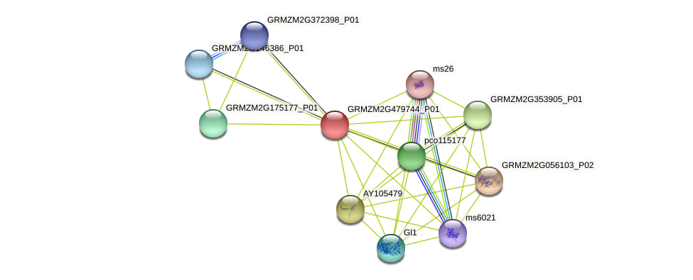 GRMZM2G479744_P01 protein (Zea mays) - STRING interaction network