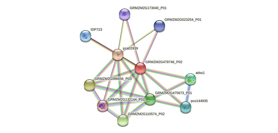 GRMZM2G479746_P02 protein (Zea mays) - STRING interaction network