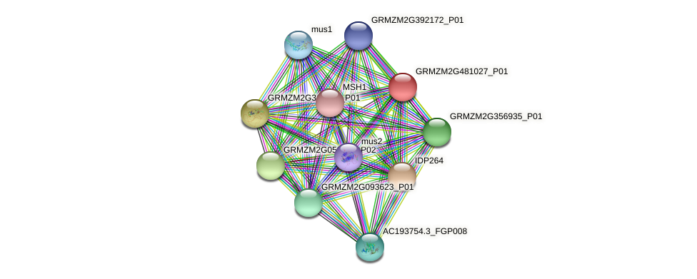 GRMZM2G481027_P01 protein (Zea mays) - STRING interaction network