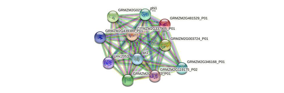 GRMZM2G481529_P01 protein (Zea mays) - STRING interaction network