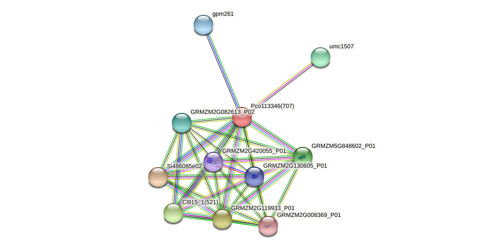 GRMZM2G481548_P01 protein (Zea mays) - STRING interaction network