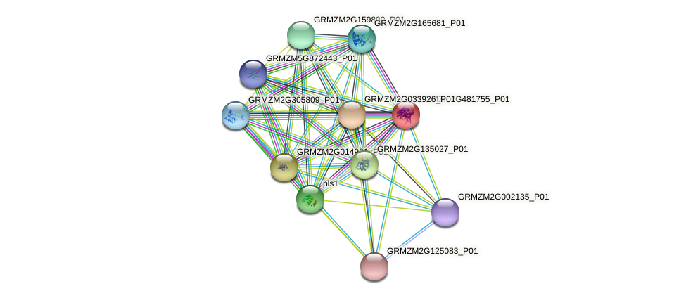 Zm.31811 protein (Zea mays) - STRING interaction network