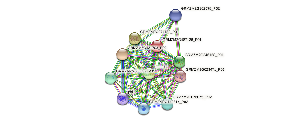 GRMZM2G487136_P01 protein (Zea mays) - STRING interaction network