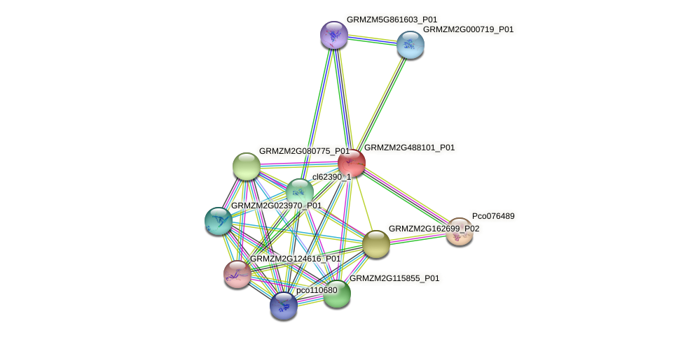 GRMZM2G488101_P01 protein (Zea mays) - STRING interaction network