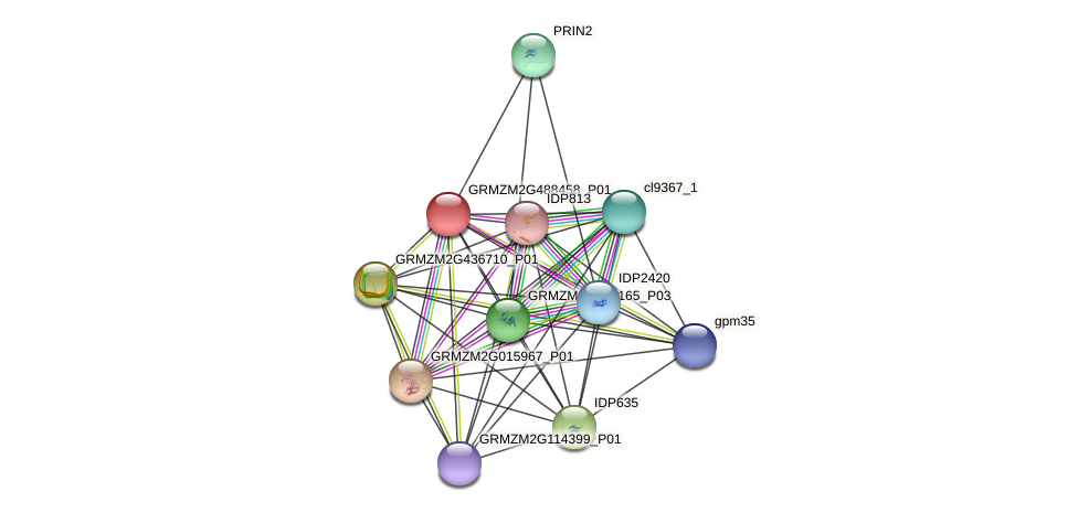 GRMZM2G488458_P01 protein (Zea mays) - STRING interaction network