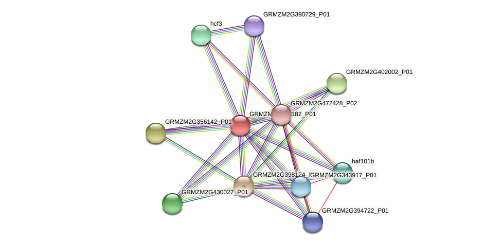 GRMZM2G499182_P01 protein (Zea mays) - STRING interaction network
