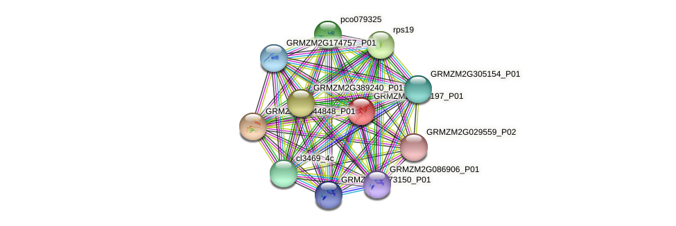 GRMZM2G499197_P01 protein (Zea mays) - STRING interaction network