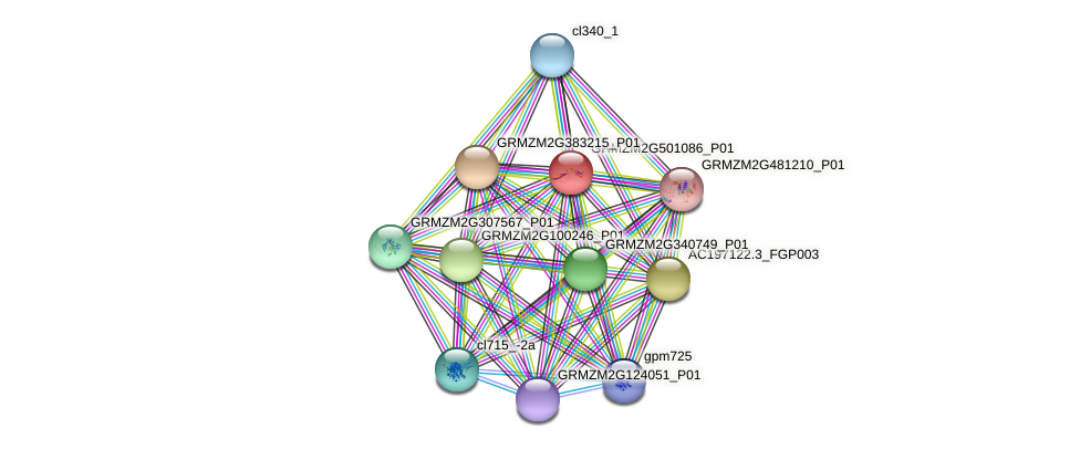 GRMZM2G501086_P01 protein (Zea mays) - STRING interaction network