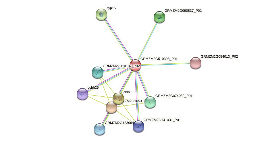 GRMZM2G510303_P01 protein (Zea mays) - STRING interaction network