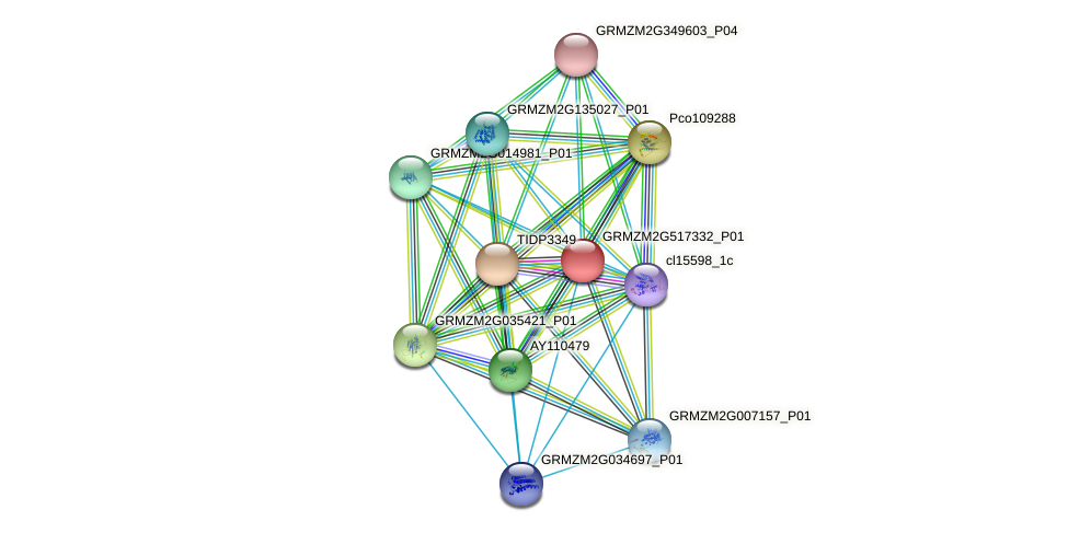 GRMZM2G517332_P01 protein (Zea mays) - STRING interaction network